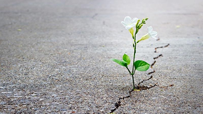 Resultado de imagem para esperança